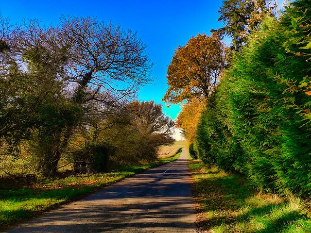Route d'automne.