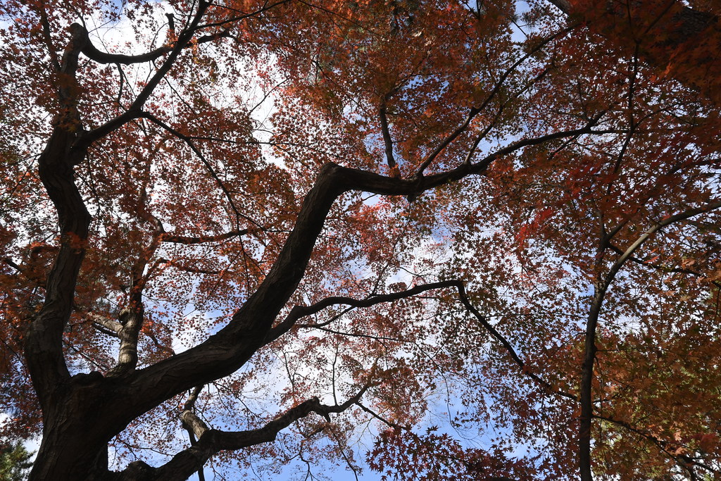 Leaving Autumn