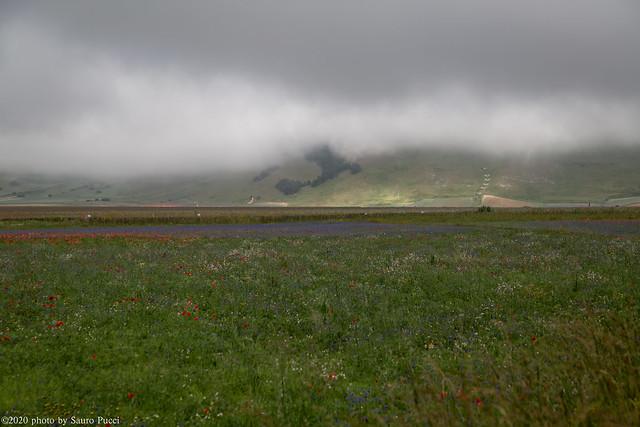 Castelluccio di Norcia  -Luglio 2020-