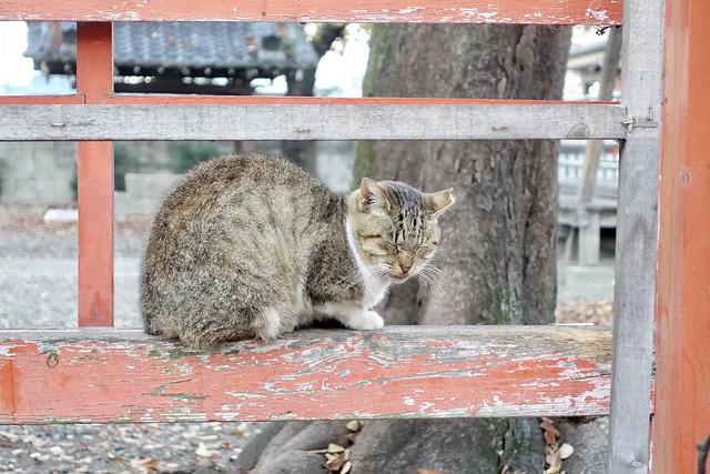 Today's Cat@2020−12−03