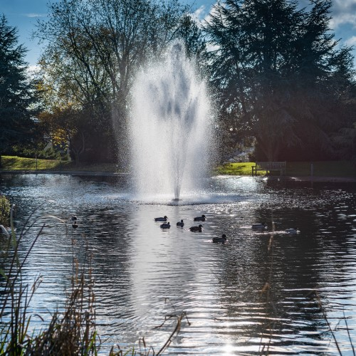 Photo of the fountain in the campus lake with ducks swimming around it