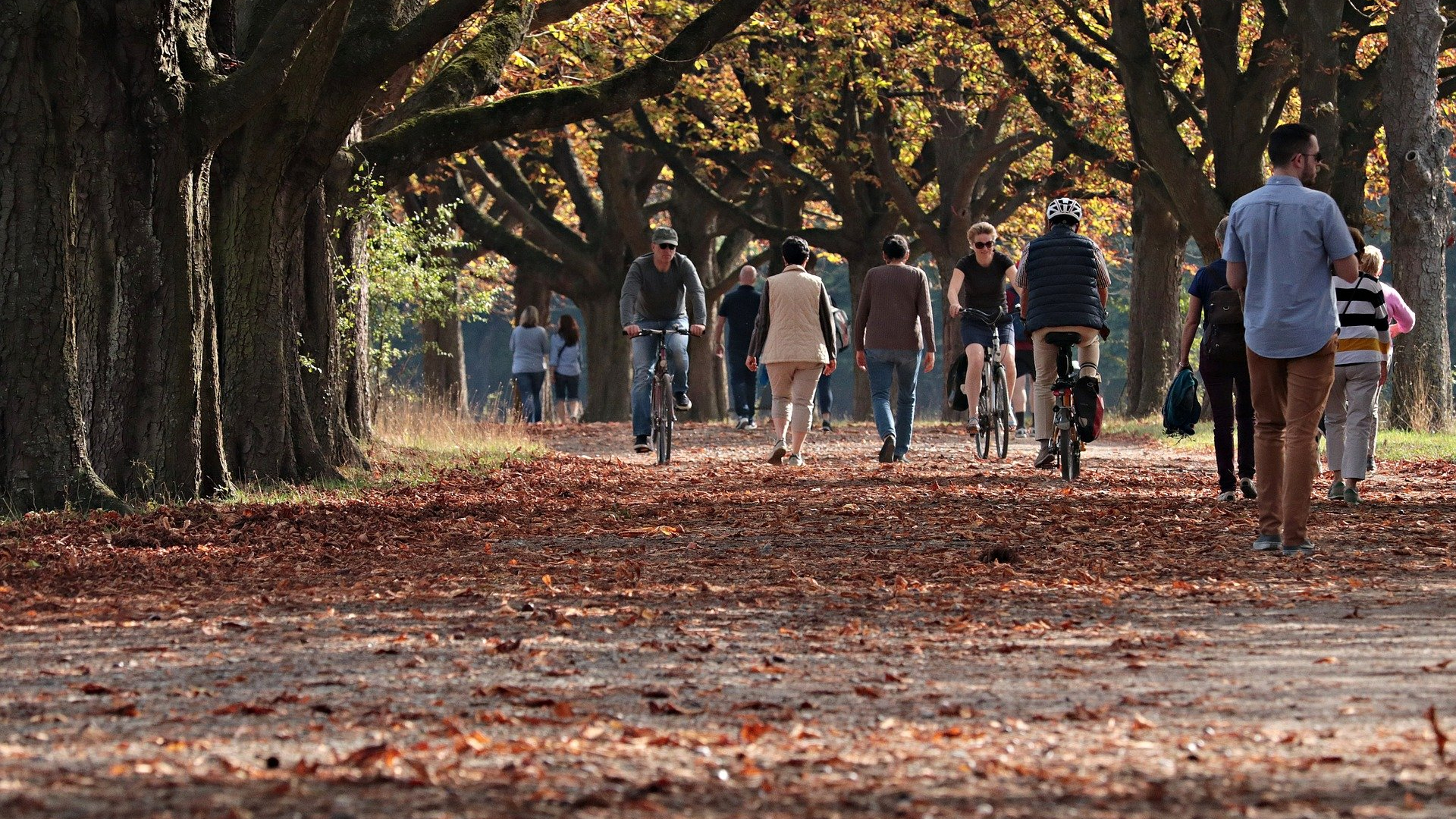 People walking and cycling down a tree lined avenue