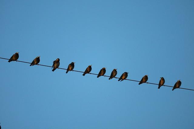 Birds having social distance