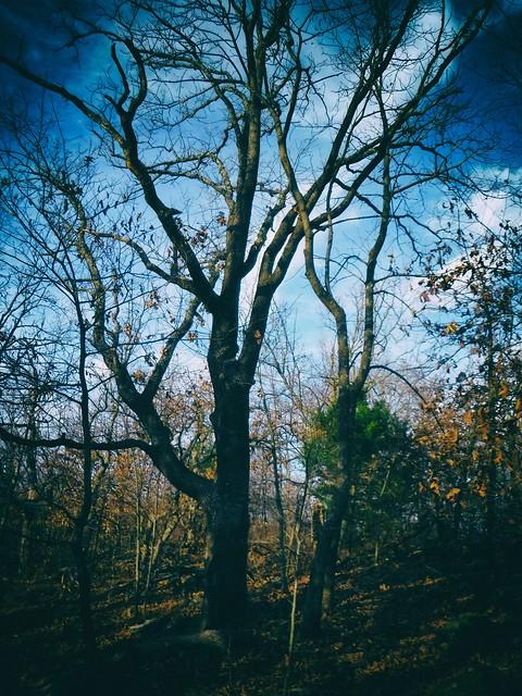 TM Tree 01