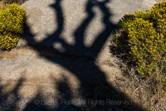 Juniper Shadow in the Organ Mountains
