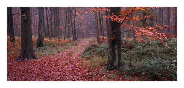 Autumn splendour(5)