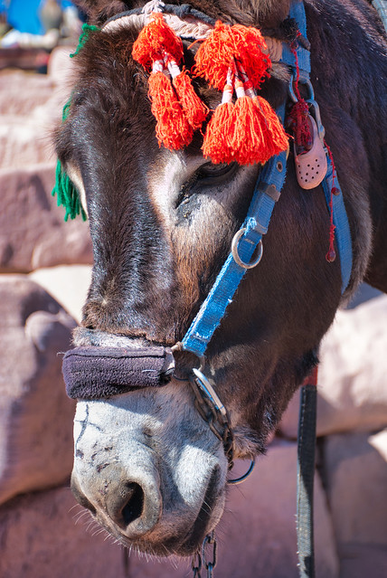Donkey ornaments