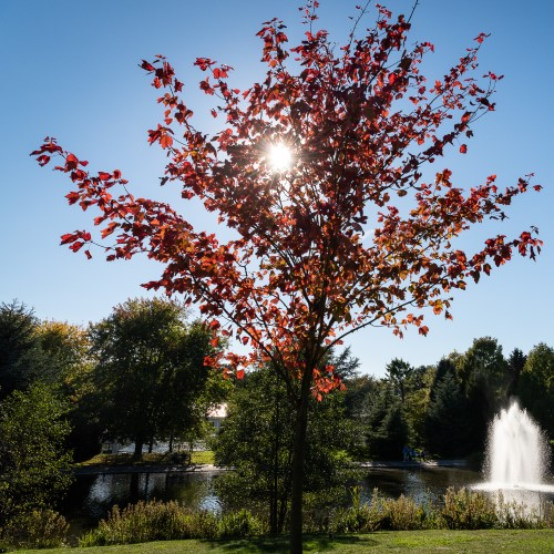 Photo of a tree with the campus lake in the background