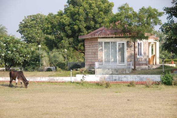 DSC_2304IndiaRajasthanJhalawarChandrabhagaFairBungalow