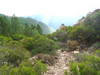 Montée du vallon de Niffru vers le GR20 : sur l'ancien chemin à la sortie de la forêt