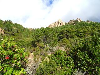Montée du vallon de Niffru vers le GR20 : le sentier et les aiguilles en haut