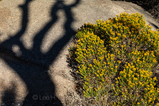 Juniper Shadow in the Organ Mountains