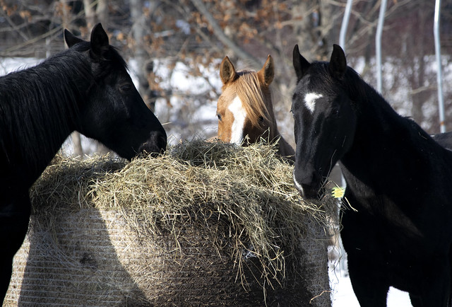 hay-it's whats for lunch