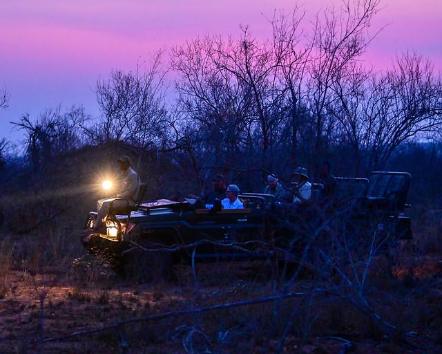 Safari de noche