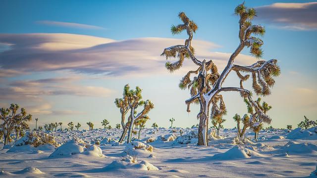 december desert