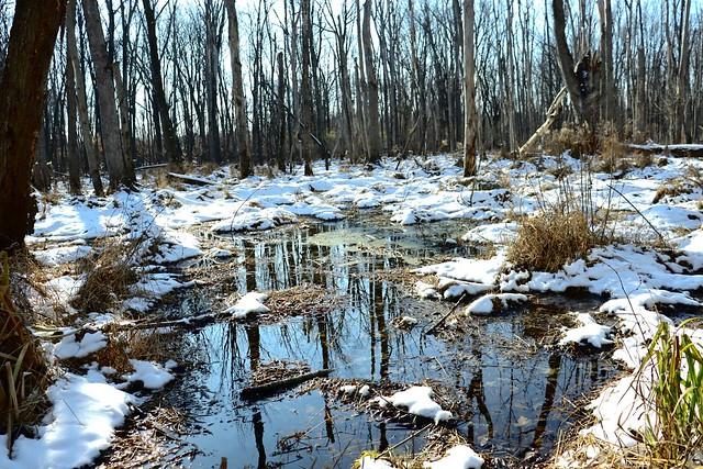 December at Tinker Nature Park Henrietta, NY
