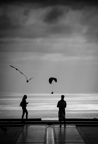 sandiego california southerncalifornia salkinstitute birds ocean water sky clouds moody people silhouette yard paraglider pacificocean sea view peaceful calmness monochrome blackandwhite bw