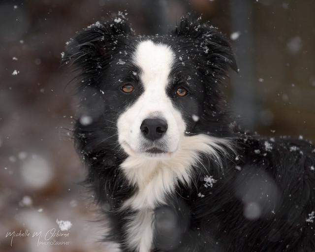 snow-DSC01783