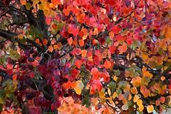 Autumn overdose