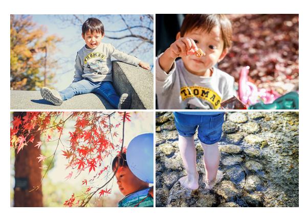 秋の公園で遊ぶ男の子 赤く色づいたモミジ
