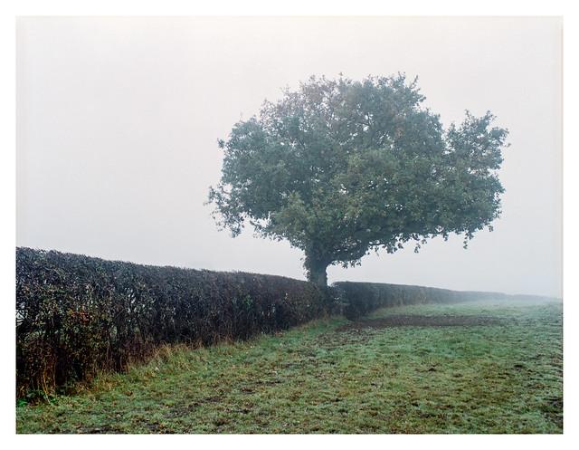 It's a mist-tree