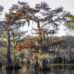 Autumn On Caddo Lake No. 55