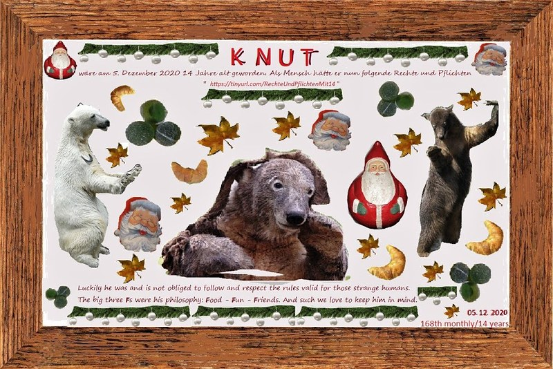 KNUT_168thMonthly_14YEARs_5Dezember2020_COLLAGE_Mi_15h00_201204