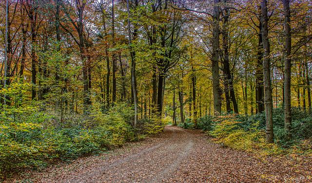 Autumn in de