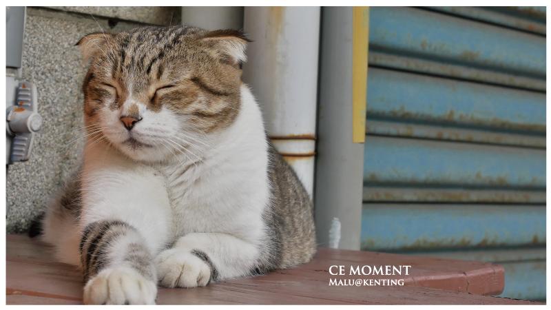 默默很甜cemoment-29