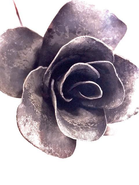 This Rose