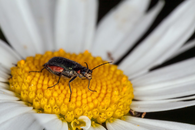 Inflatable Beetle, Pt. 2 - _TNY_4557