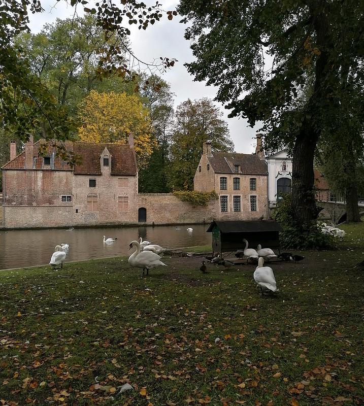 Los cisnes de Brujas