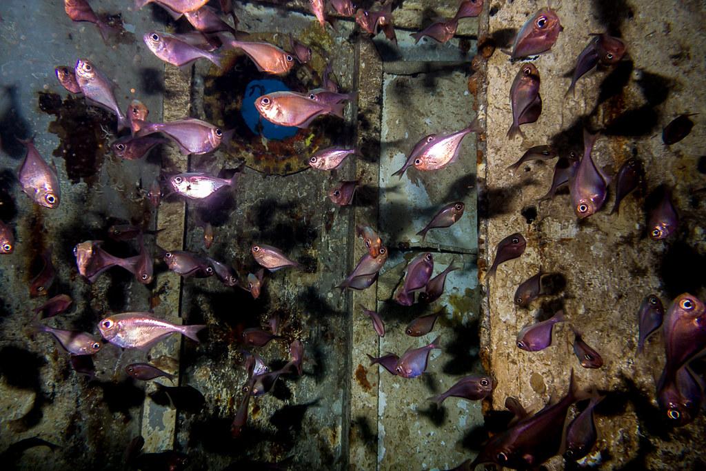 Room full of fish