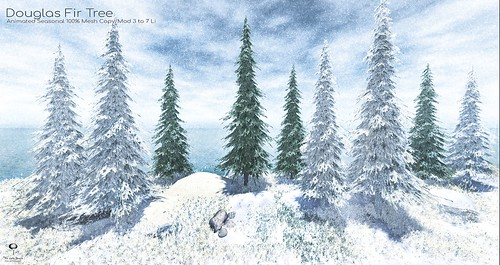 The Little Branch - Douglas Fir Tree - The Liaison Collaborative