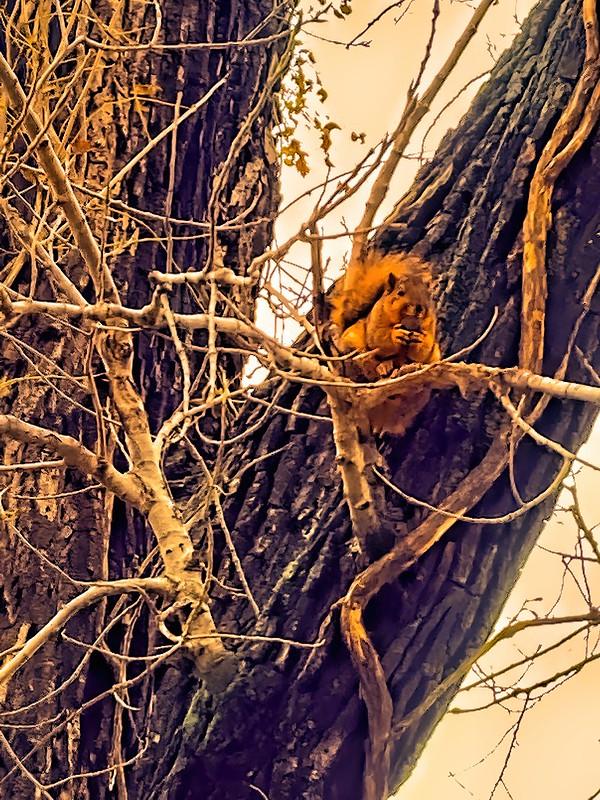 Squirrel original-DeNoiseAI-denoise-studio
