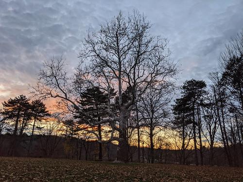 tree pinebankdpromontory jamaicapond jamaicaplain sunset boston bostonma massachusetts newengland autumn fall publicpark emeraldnecklace