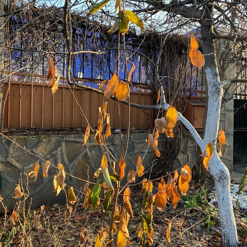 Огород в ноябре