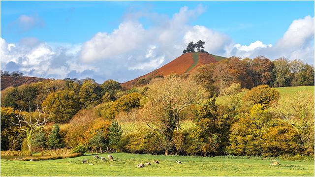 Colmer's Hill near Bridport.