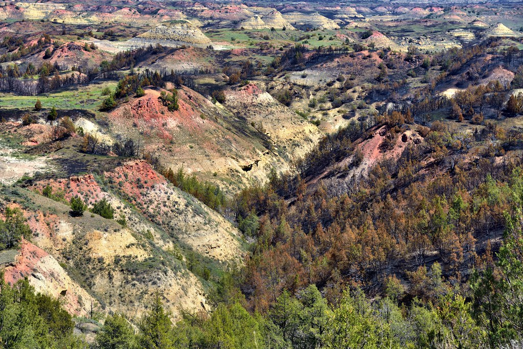 The Impact of Less in Theodore Roosevelt National Park