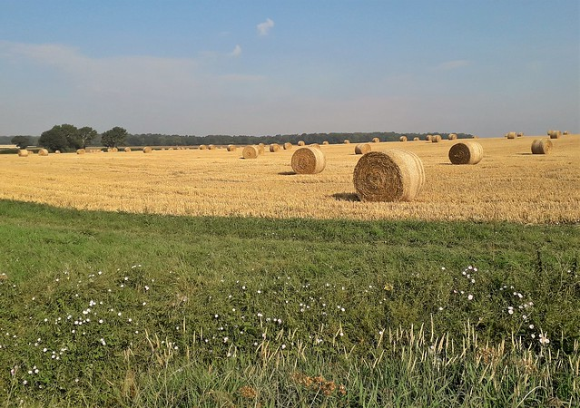 Wicken - After the Harvest