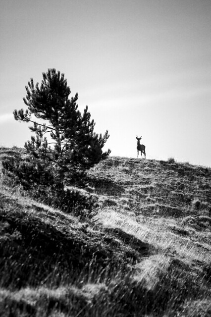 Cervo Monte Bove