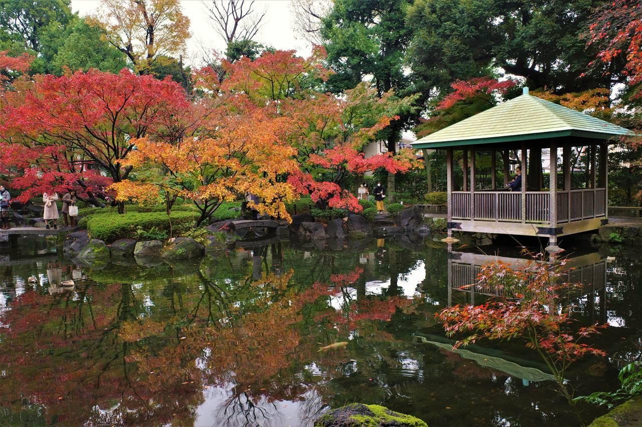 大田黒公園の紅葉と池の東屋