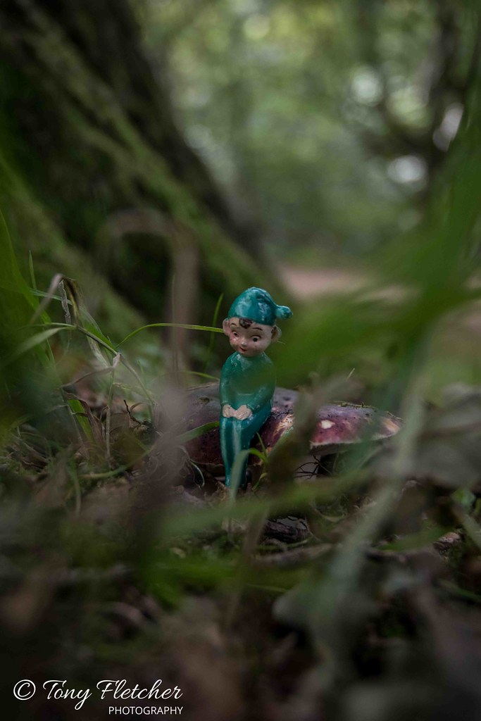 'PIXIE IN GROSMONT WOODS' -'NORTH YORKSHIRE MOORS'