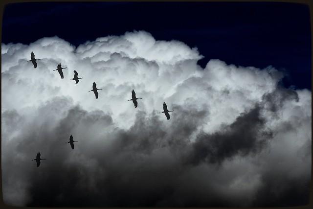 Que nadie corte tus alas. Tú eres quien decide lo alto que quieres volar.