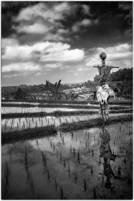Le gardien des rizières