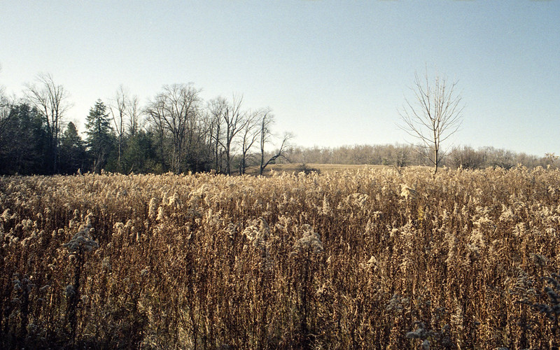 Late Fall Meadow