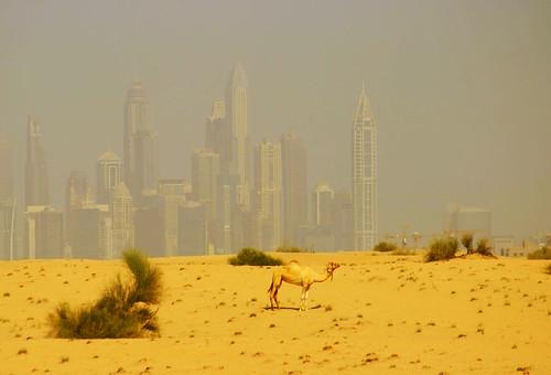 Contrastes en Dubai. Foto de Aitor Agirregabiria