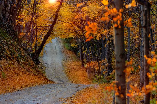 Lonely Autumn Road (Explored)