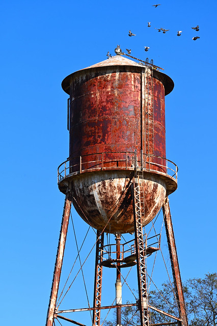 Rusty water tower with birds