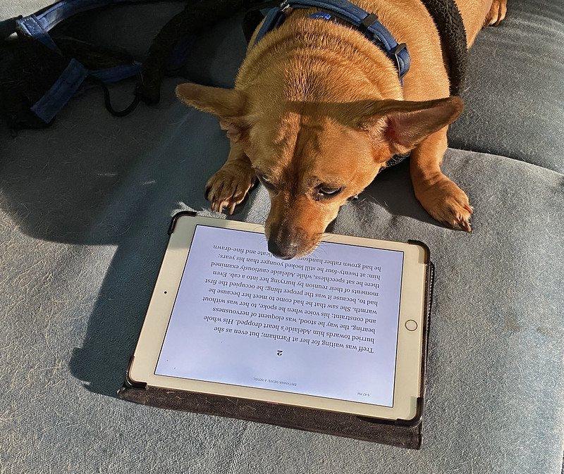 Little Burrito wants to know if there will be a test on this book.